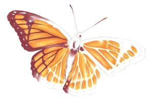 Drawn butterfly colour pencil Butterfly Draw Quarto Colored Pencil