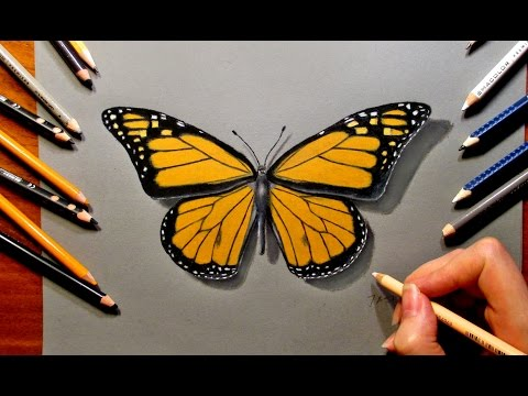 Drawn butterfly colour pencil Draw Pencils Jasmina  Drawing