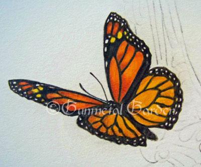 Drawn butterfly colour pencil Step Monarch Gunmetal step an