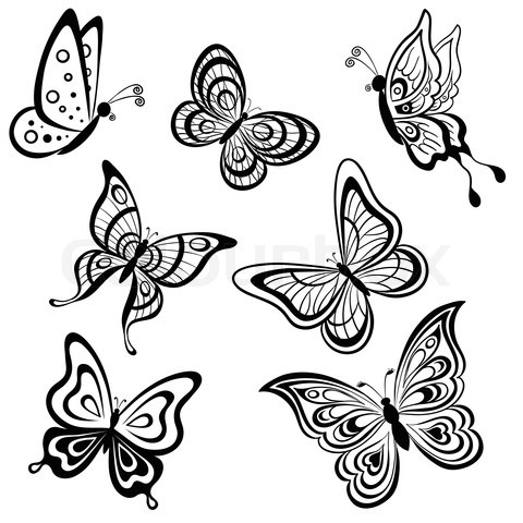 Drawn butterfly design drawing Stock 'set image hand draw