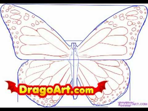 Drawn butterfly dragoart DragoArt step by step How