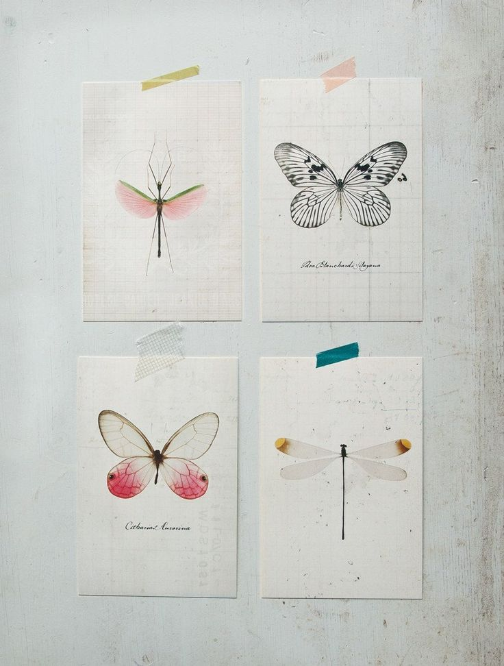 Drawn butterfly dragonfly Pinterest Butterfly images best Butterflies