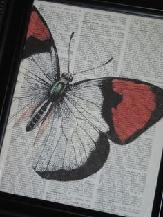 Drawn butterfly ever nature Dictionary butterfly Dictionary 8 Wall