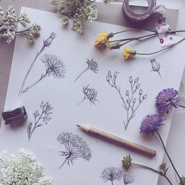 Drawn butterfly ever nature Instagram ideas com drawings flowers