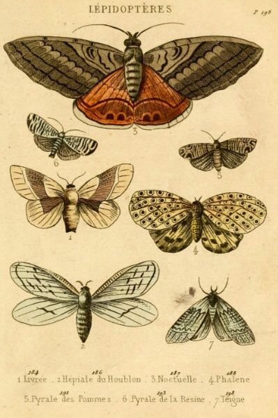 Drawn butterfly natural Best Moth Natural French AND