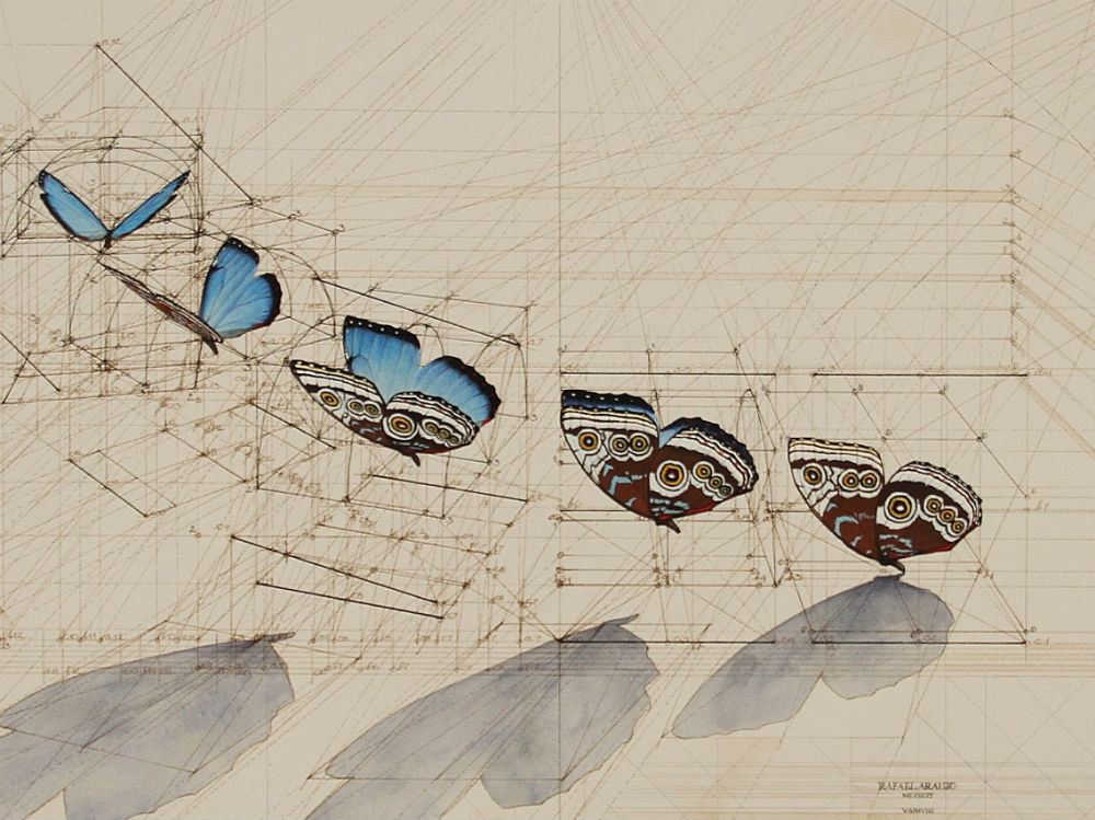 Drawn butterfly pen Best Drawings Detailed Pinterest drawings