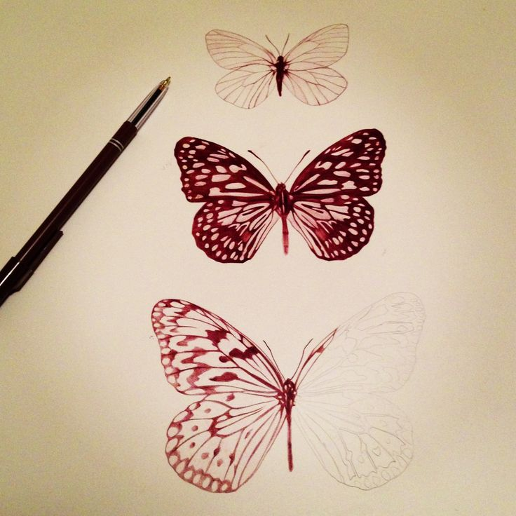 Drawn butterfly pen Pinterest 77 on images drawings