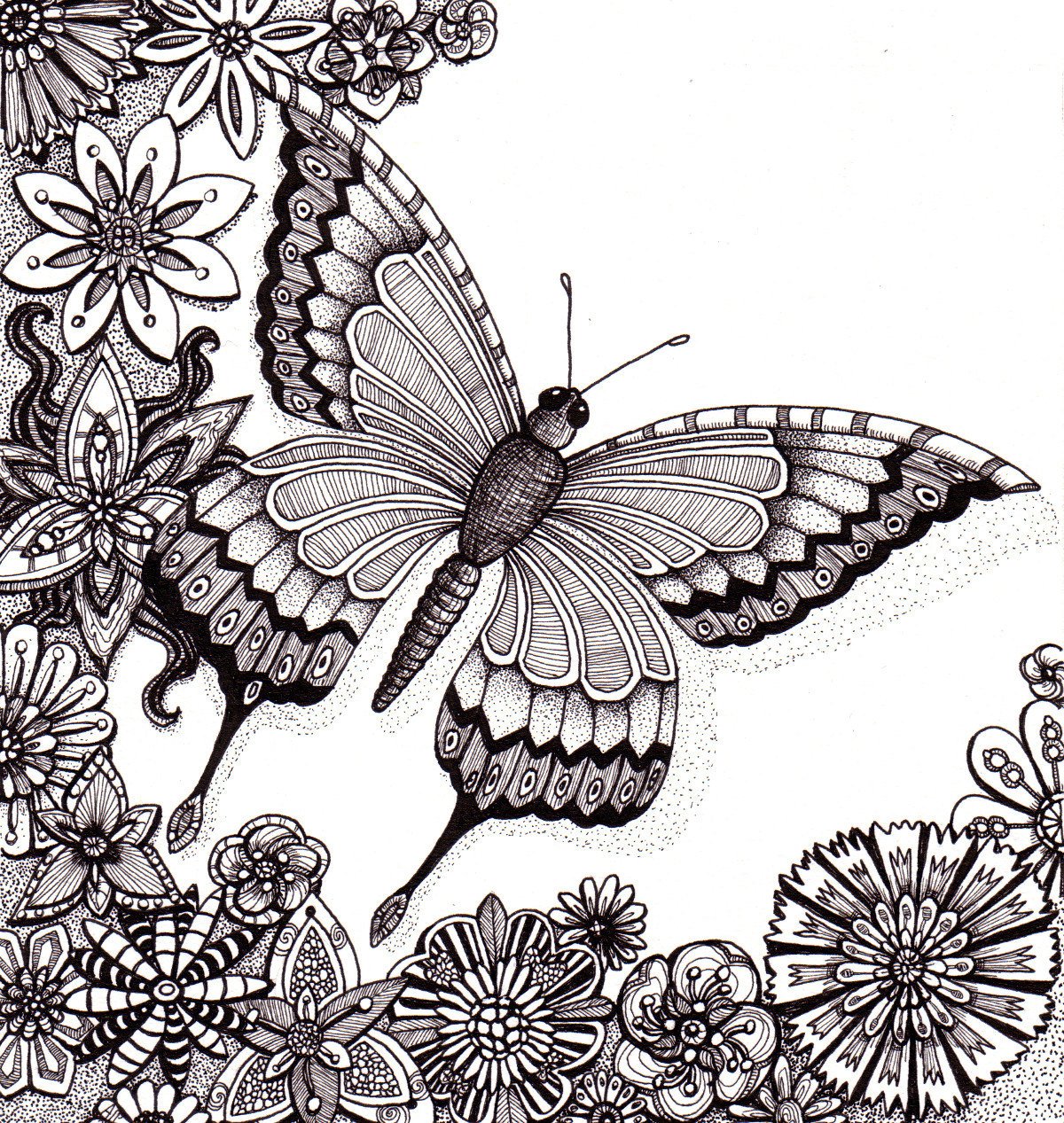 Drawn butterfly pen Flutter adults Butterfly whimsical