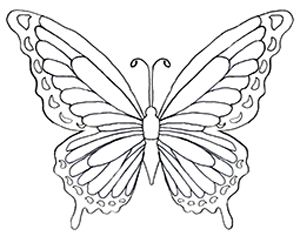 Drawn butterfly rainbow Drawing  Coloring Pinterest 25+
