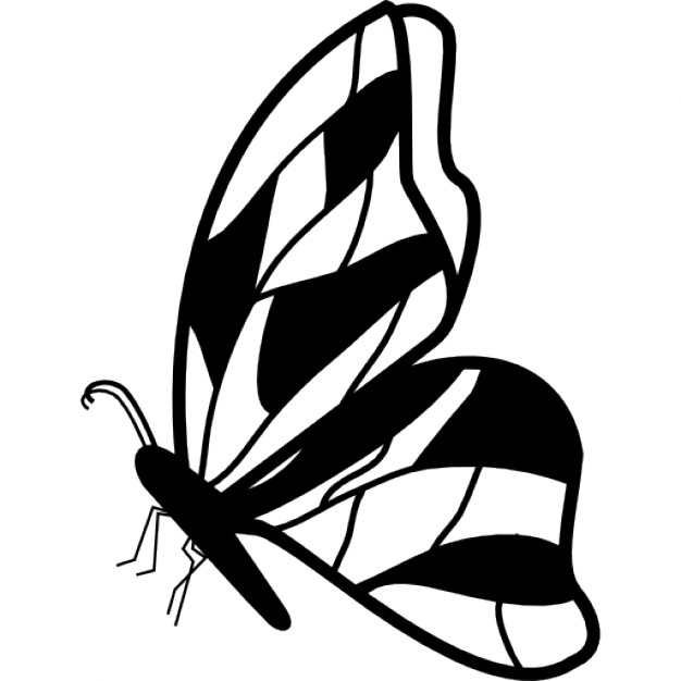 Drawn butterfly side view Design Free view Butterfly wings