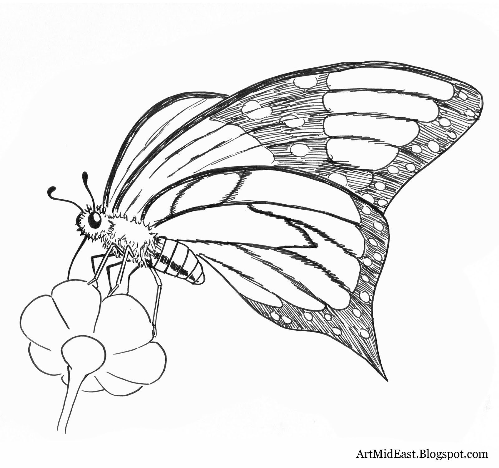 Drawn butterfly side view Simple Side Simple photo#20 butterfly