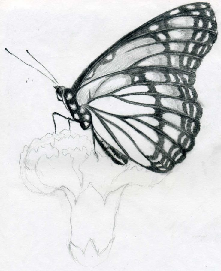 Drawn butterfly simple realism Pencil Butterfly butterflies Easy drawings