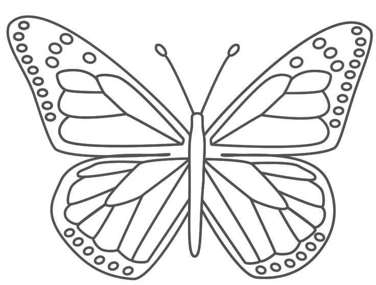 Drawn butterfly simple realism 40 Page Realistic Coloring Butterfly