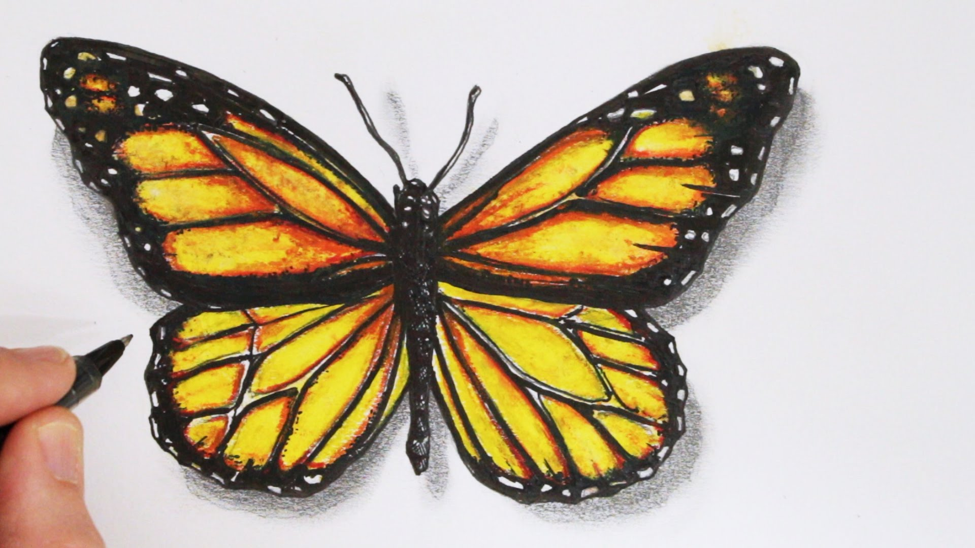 Drawn butterfly simple realism Realistic a How Draw Time