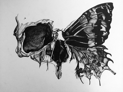 Drawn butterfly butterflie Image for popular and