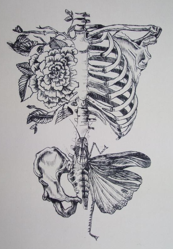 Drawn butterfly soft By #tattoo Anatomy Ladds #skeleton