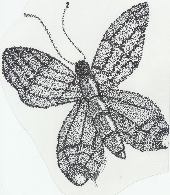 Drawn butterfly stippling On DeviantArt Stipple argyle19 by