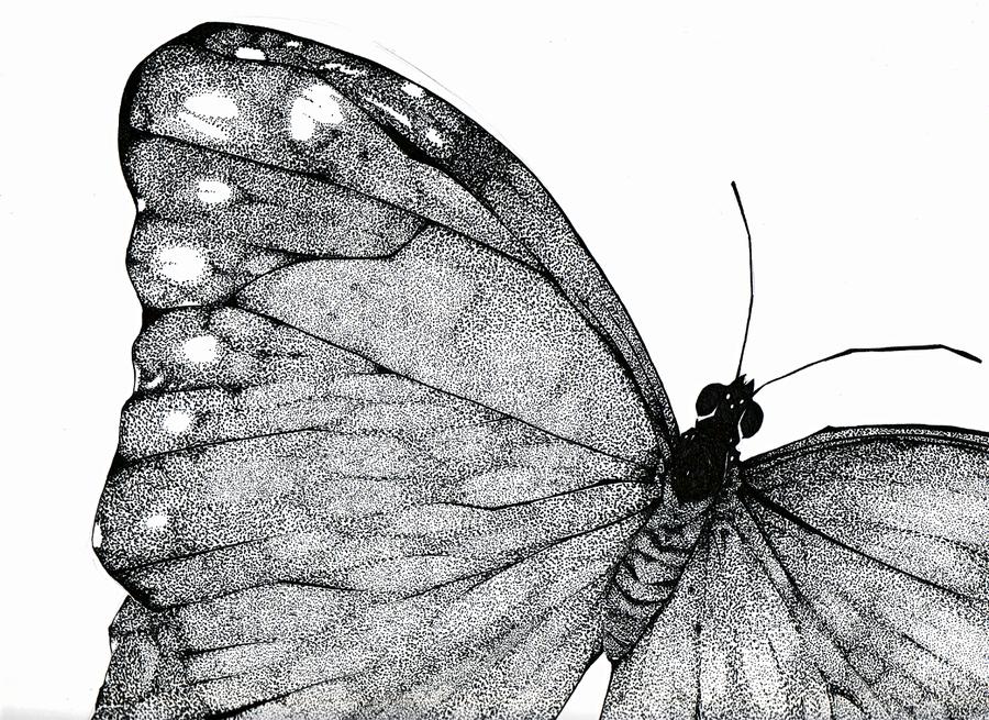 Drawn butterfly stippling On DeviantArt Stippled attorneyhoboninja by