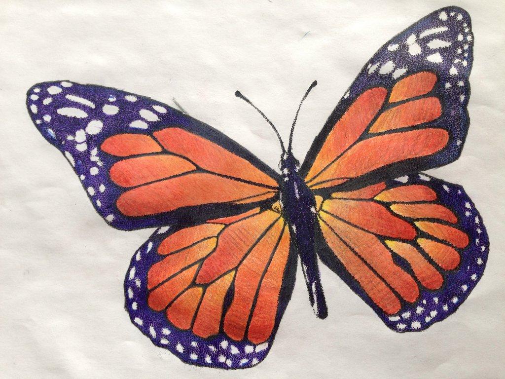 Drawn butterfly stippling Stippling by Butterfly DeviantArt UrbanTheProfessional