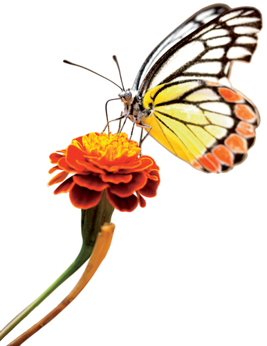 Drawn butterfly the garden drawing The  AGCO site a