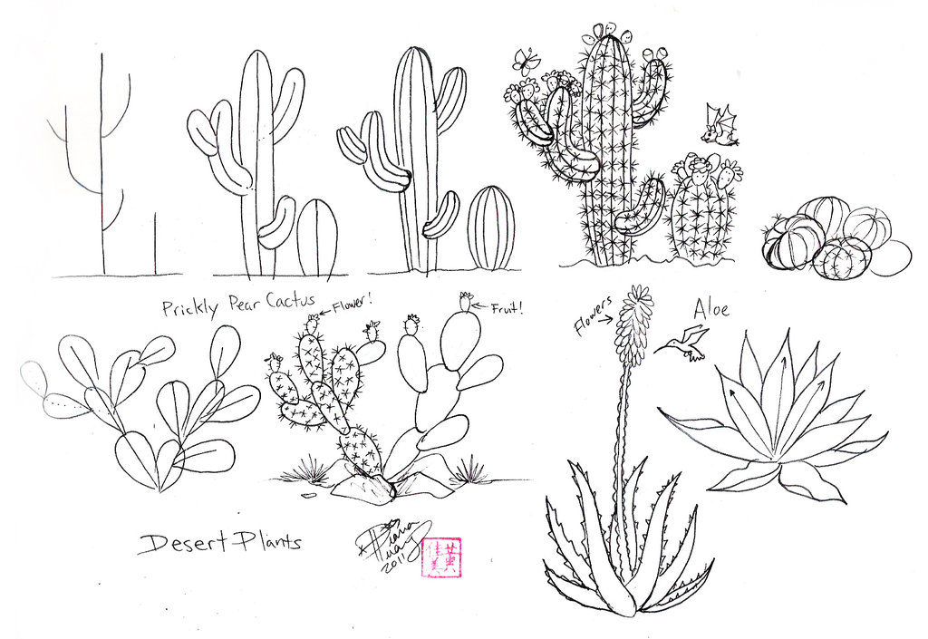 Drawn cactus On by doodle Huang on