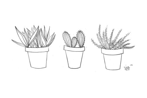 Drawn plant cactus succulent Line drawing  Tumblr cactus