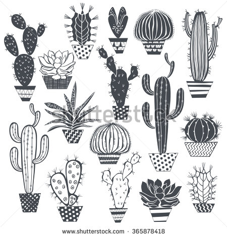 Drawn cactus black and white Succulents plants hand on illustrations