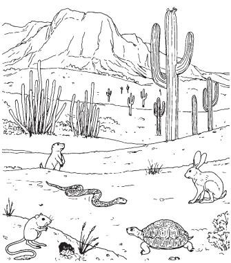 Drawn cactus desert animal Life Adapt How Animals Desert