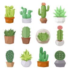 Drawn cactus flat design Nature nature  cartoon illustration