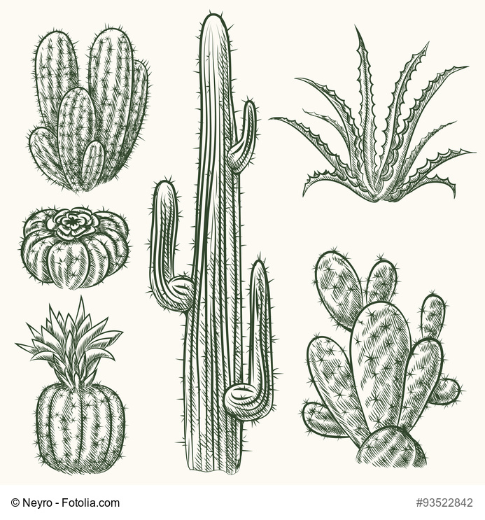 Drawn plant mexican flower Cactus drawn mexican nature vector