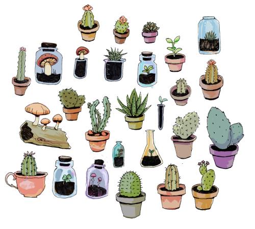 Drawn plant cactus succulent Cactus illustration Digital Art Design