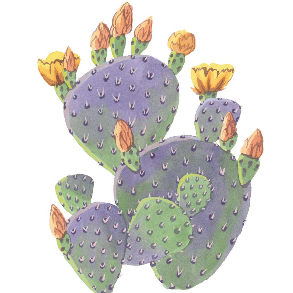 Drawn cactus prickly pear cactus Print Prickly Road Pear Cactus