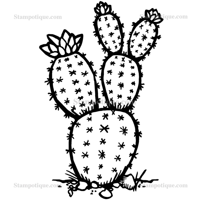 Drawn cactus prickly pear cactus Zoom Cactus Pear Prickly