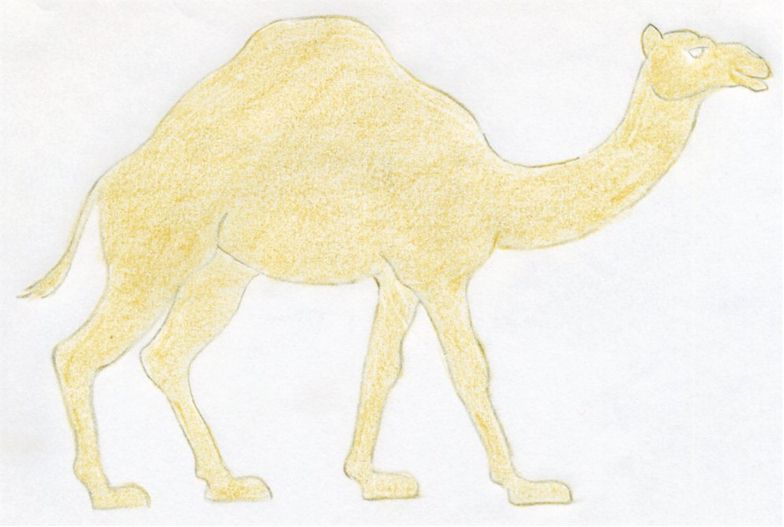 Drawn camel Rest the pencil but coloring