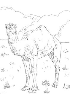 Drawn camel children's – Pages Picture of kinder