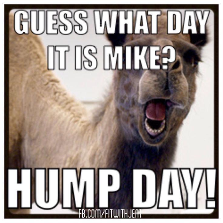 Drawn camel hump day camel Hump geico day #humpday Best