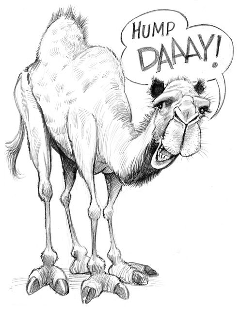 Drawn camel hump day camel Day day TOM and Toms