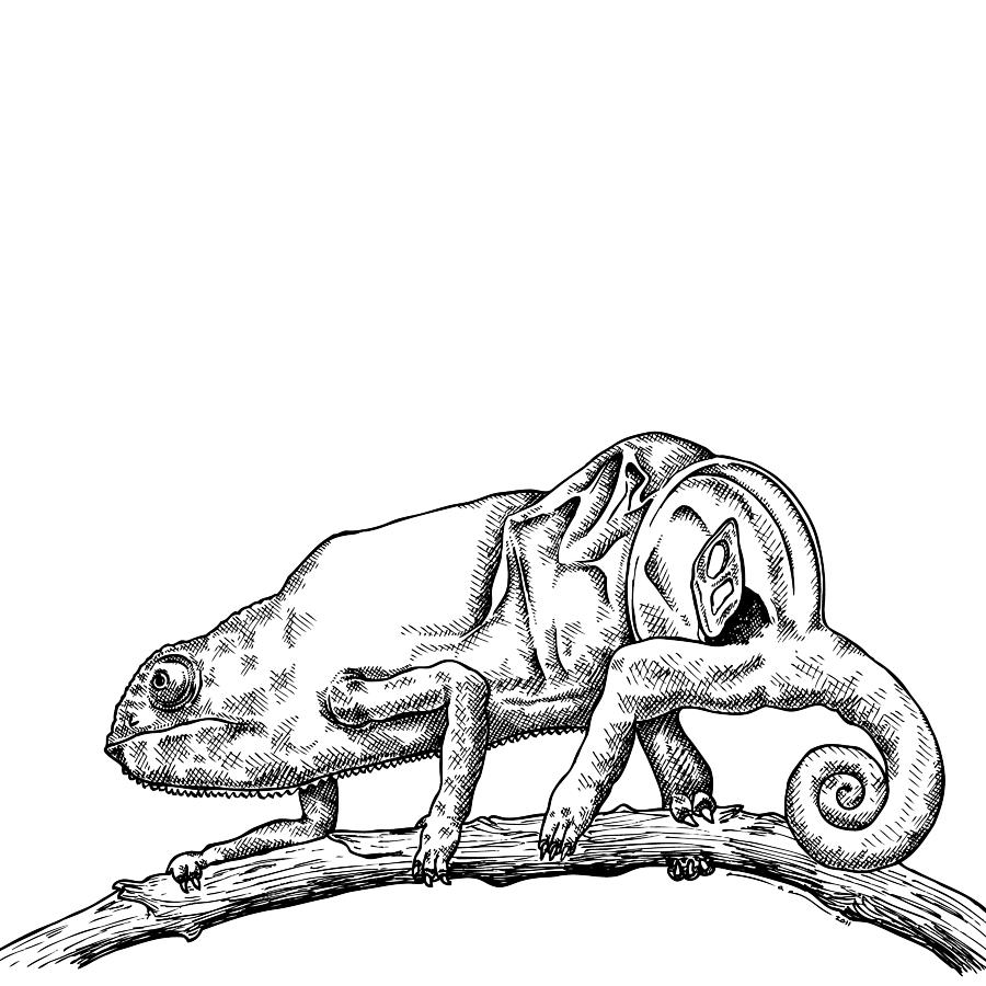Drawn cameleon Addison Chameleon Addison Karl Drawing