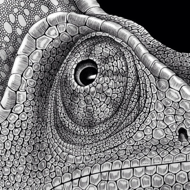 Drawn cameleon Of the of Art —