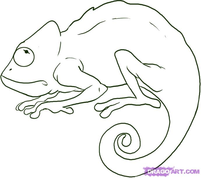 Drawn cameleon Outline step chameleon a DirDoo