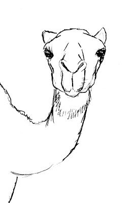 Drawn camels Images about a to on