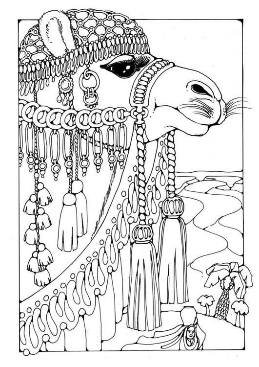 Drawn camels coloring book Coloring Pinterest Camel download 59