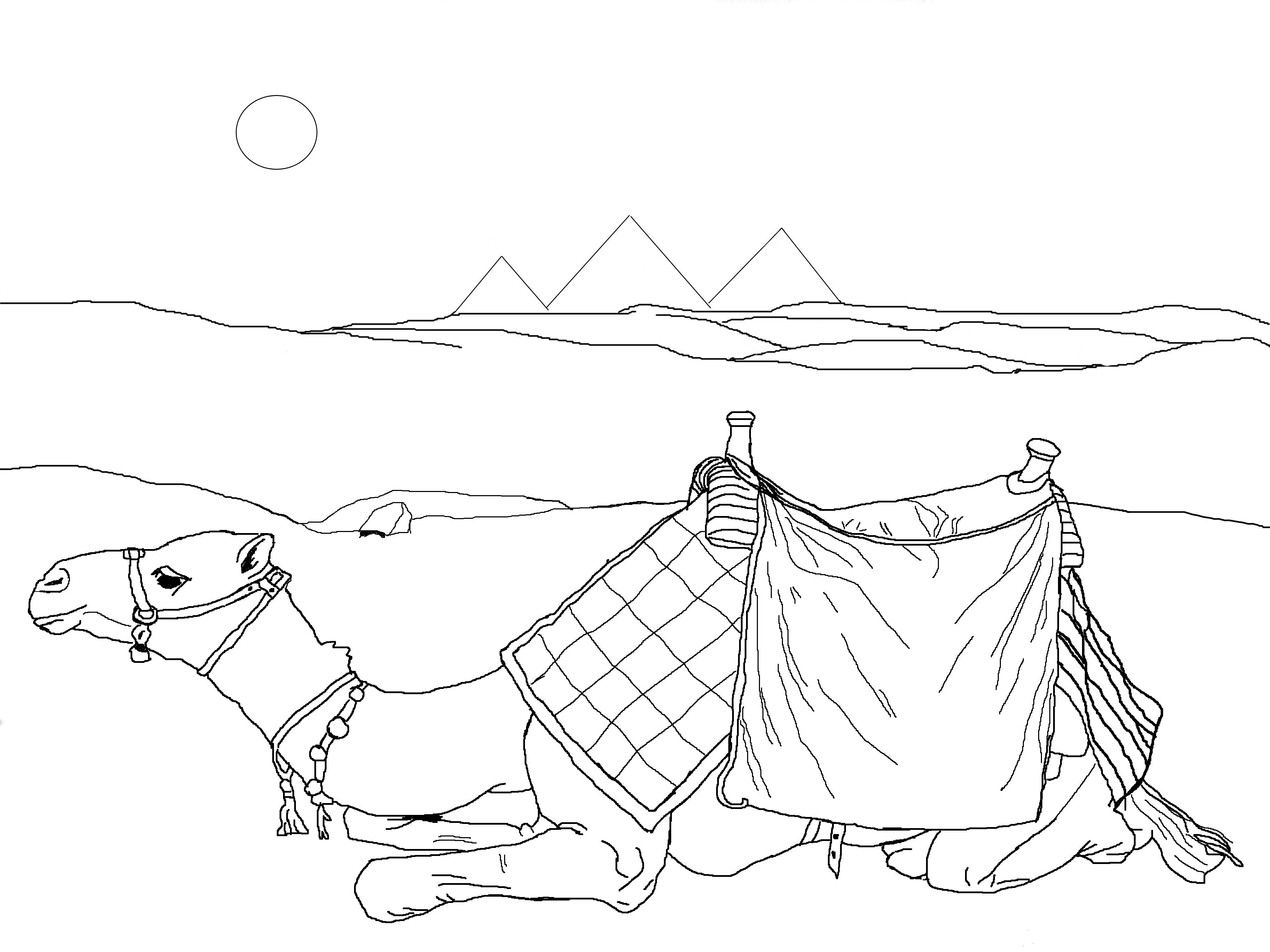Drawn camels coloring book Pages Pages Pages Coloring Coloring
