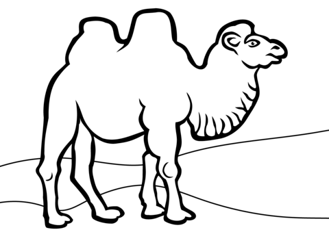 Drawn camels coloring book Printable of coloring page Printable