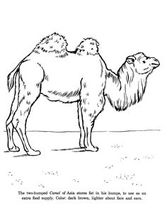 Drawn camels coloring book And page Search coloring