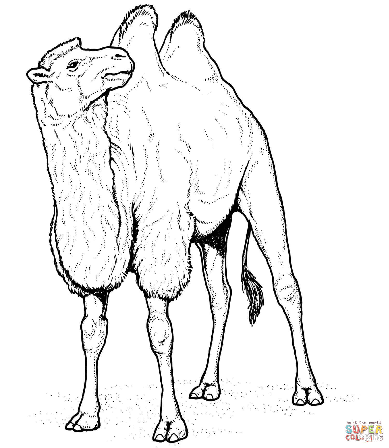 Drawn camels cute Coloring pages Free coloring Camels