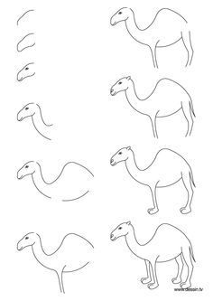 Drawn camels cute Drawing really directed Horse ever