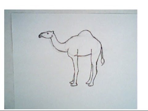Drawn camels easy (drawing a step) How (drawing