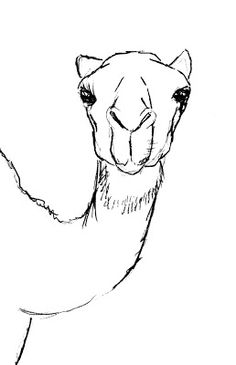 Drawn camels easy And draw How draw Drawing