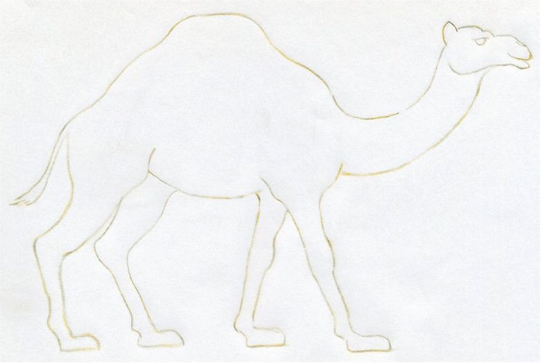 Drawn camels easy Quick  in do lines